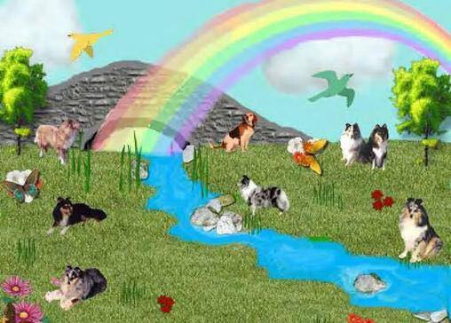 rainbow bridge minnesota sheltie rescue